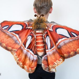 atlas moth wings