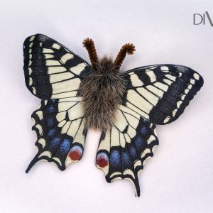 butterfly costume accessory